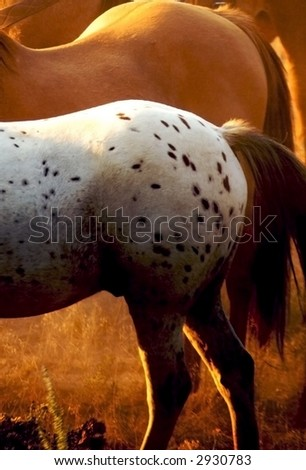 Horse Tails - stock photo