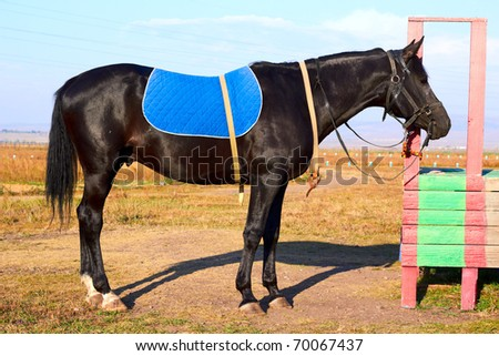 Horse tied on a leash