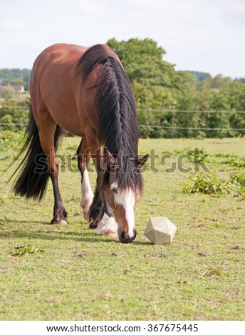 Horse toy: Entertains while extending treat time - stock photo