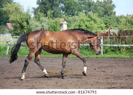 Horse trotting at the field - stock photo