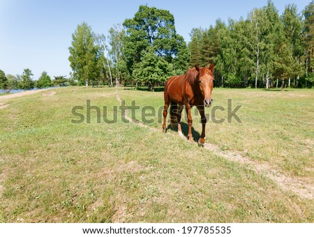 horse walking along the trail