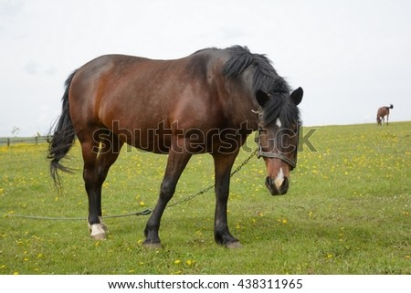 horse walking in a pasture