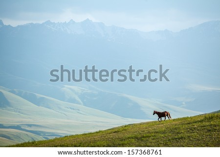 Horse walking in mountains at sunset. Shallow focus on horse - stock photo
