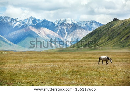 Horse walking in mountains, Tien Shan, Kyrgyzstan - stock photo