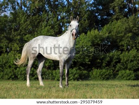 Horse walking in rural field - stock photo