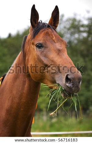 Horse walking on grass field
