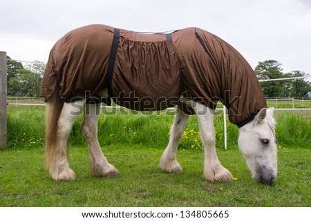 Horse wearing a protective rug against the many flying insects - stock photo