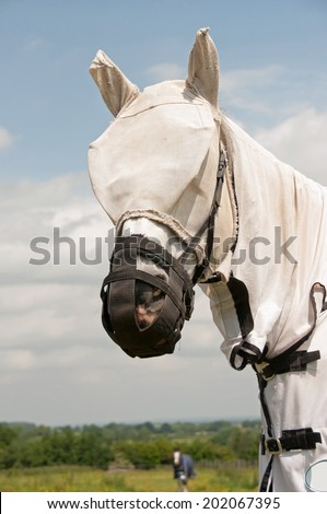 Horse wearing fly protection & a grazing muzzle  to prevent him from becoming ill with laminitis & overweight  - stock photo
