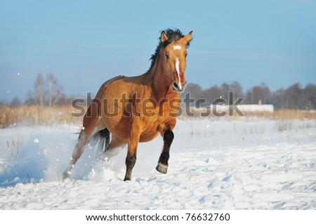 horse winter action - stock photo