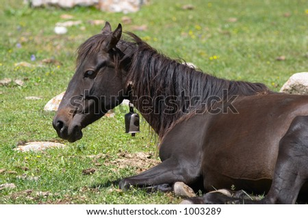 Horse with a bell resting - stock photo