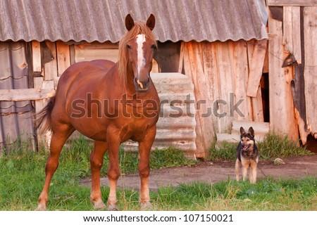 Horse with a dog near a farmstead, brown horse, farm - stock photo