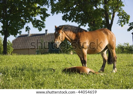 horse with a foal in a meadow - stock photo