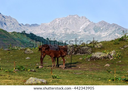 Horse with a foal on the Alpine meadow in mountains of Abkhazia - stock photo