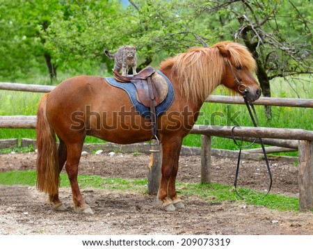 horse with a long haired and cat sitting on his back
