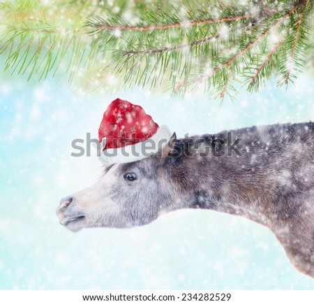 horse with a long neck in santa hat under the spruce branches in the snow, christmas card - stock photo