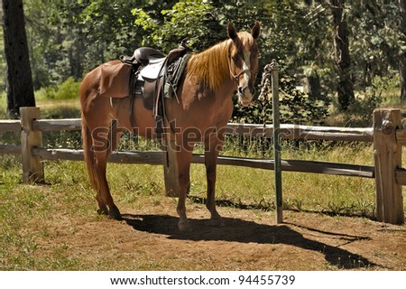 Horse with a saddle near wood fence