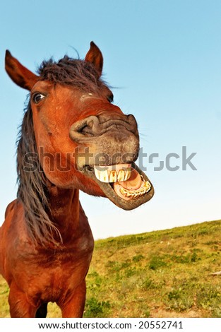 Horse with a sense of humor. - stock photo