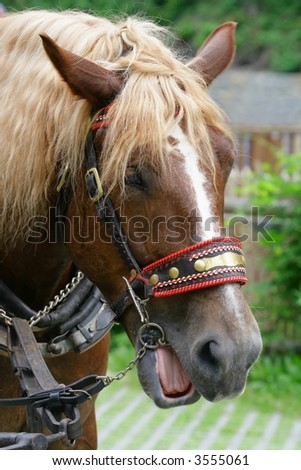 Horse with a sense of humor - stock photo