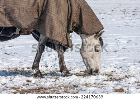 Horse with blanket grazing in a snowy pasture - stock photo