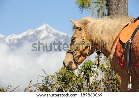 Horse with Himalayan background - stock photo