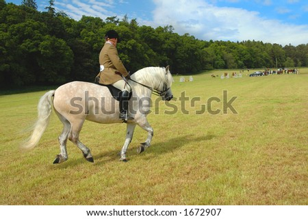 Horse with jockey at dressage tests in the park - stock photo