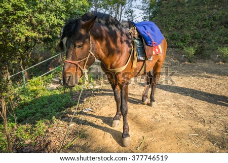 Horse with saddle on a back for carry traveler and goods. - stock photo