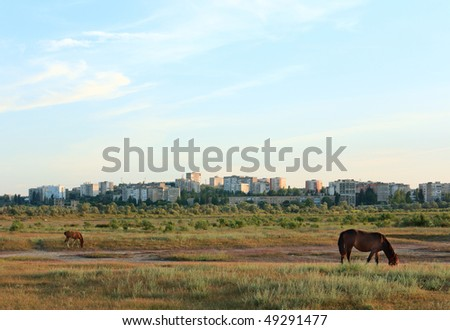 Horse with small foal in preirie pasture - stock photo