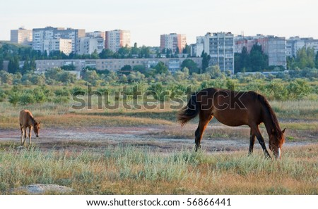 Horse with small foal in preirie pasture (near Scholkino Town, Crimea, Ukraine). - stock photo