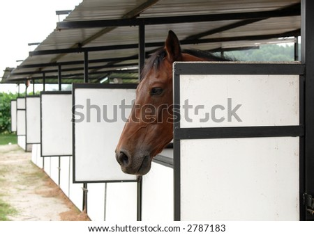 Horse with the head outside of the stable - stock photo