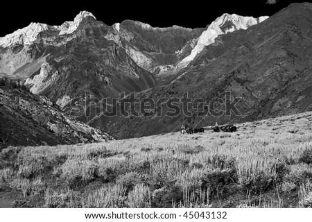 Horseback in McGee Canyon - stock photo