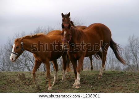 Horses 1 - stock photo