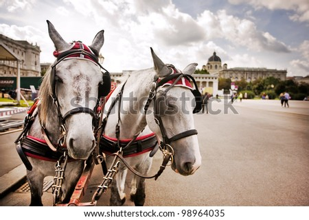 Horses and carriage tradition, Vienna, Austria - stock photo