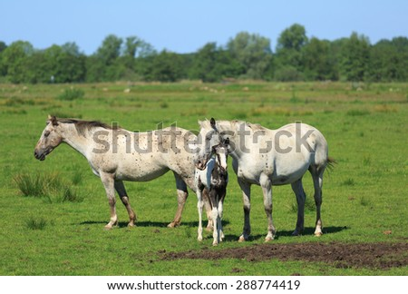 Horses and colt in a green meadow in summer. - stock photo