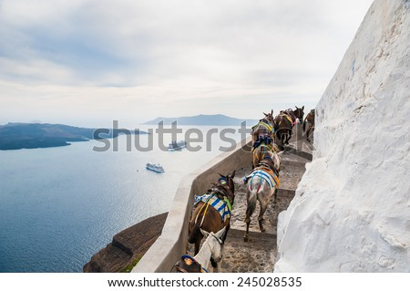 Horses and donkeys walking on the road along the sea. Beautiful landscape with sea view. Santorini island, Greece. - stock photo