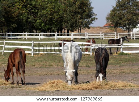horses and foals in corral farm scene - stock photo