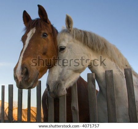 horses animals affections farms fields - stock photo