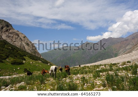 Horses are grazed near to the small mountain river - stock photo