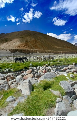 Horses are grazed on pasture near river in  Himalaya mountains. - stock photo