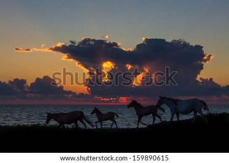 Horses are running along the beach at sunset - stock photo