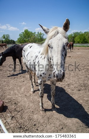 Horses at a midwestern ranch