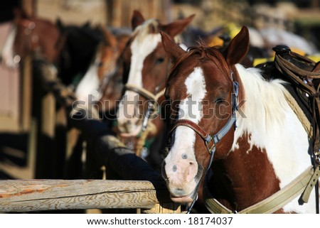 Horses at a Stable - stock photo