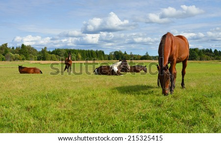 Horses at horse farm. Country landscape. Idyll