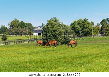 Horses at horse farm. Country landscape. selective focus - stock photo