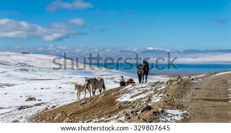 Horses at mountain pass above Song Kol lake in Kyrgyzstan. - stock photo