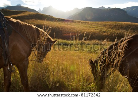 Horses at sunset, South africa - stock photo