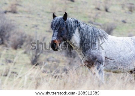 Horses breeding in Altai steppe in the early morning - stock photo