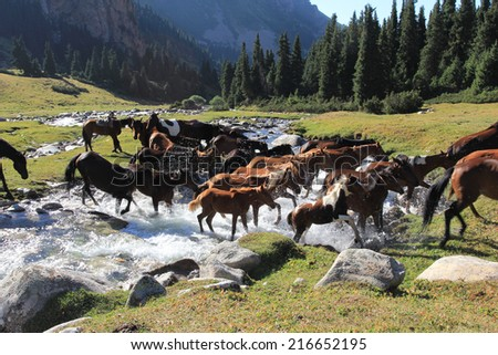 Horses cross the river in Tien Shan - stock photo
