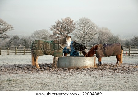 Horses eating from field feeder on a cold winters morning - stock photo