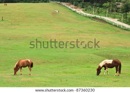 Horses eating grass in farm