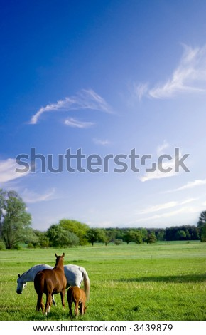 horses enjoy grass on a green meadow - stock photo